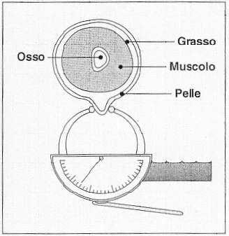 Plicometro