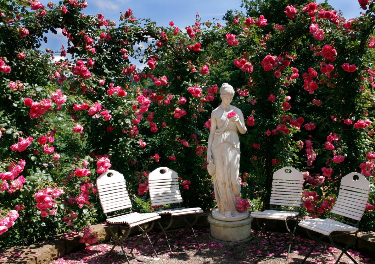 Rose e Venere