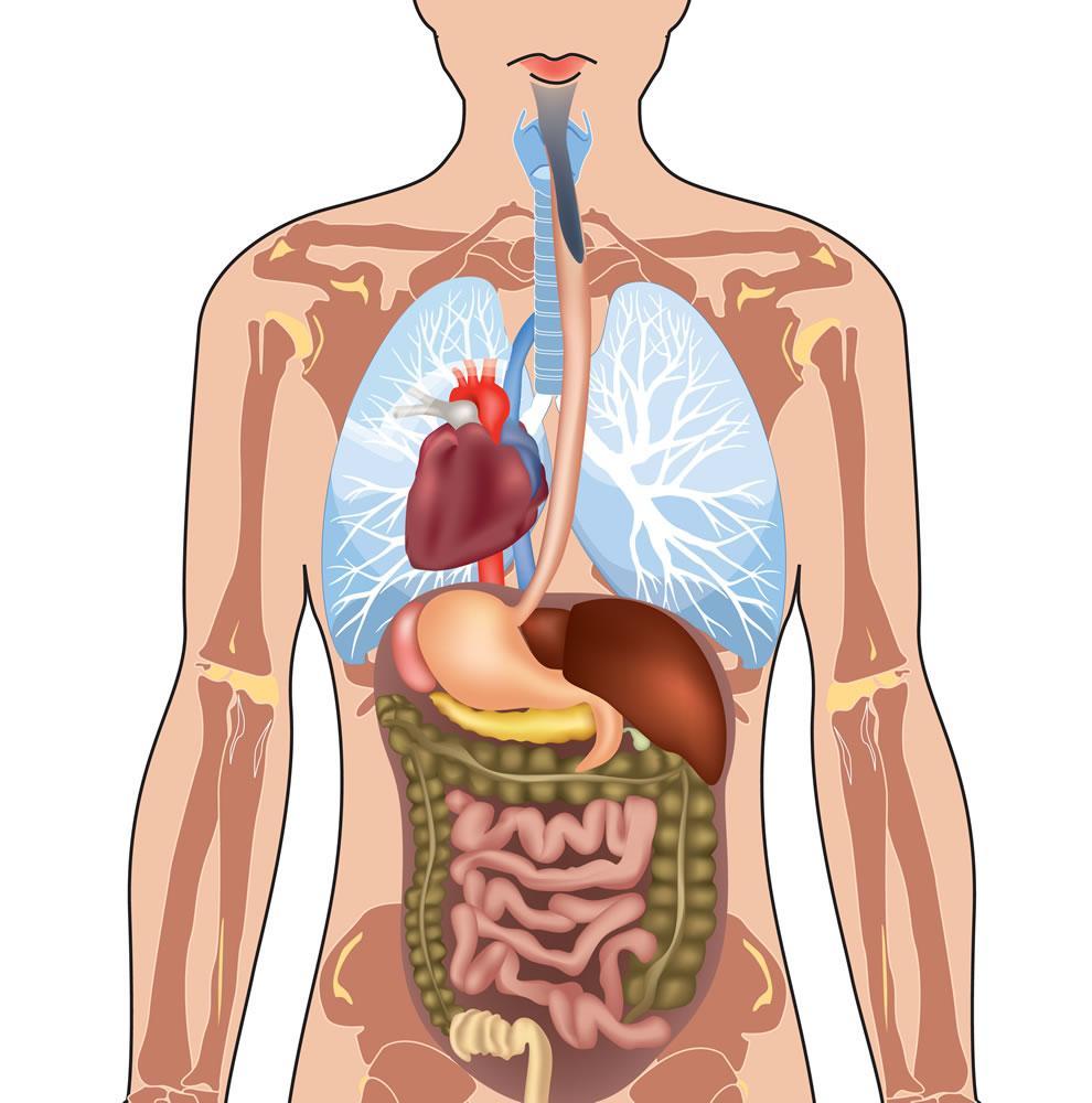 Organi in un situs inversus totalis