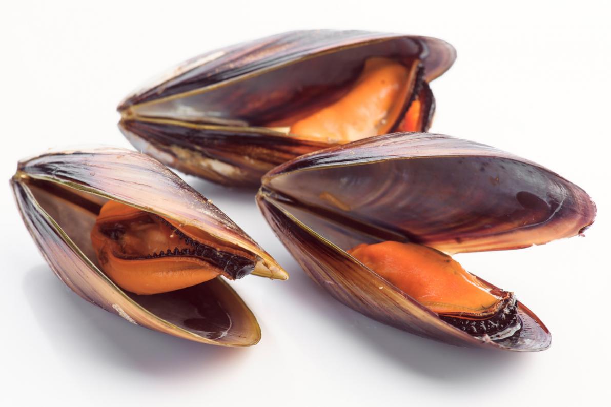 Le cozze possono accumulare saxitossina nei tessuti