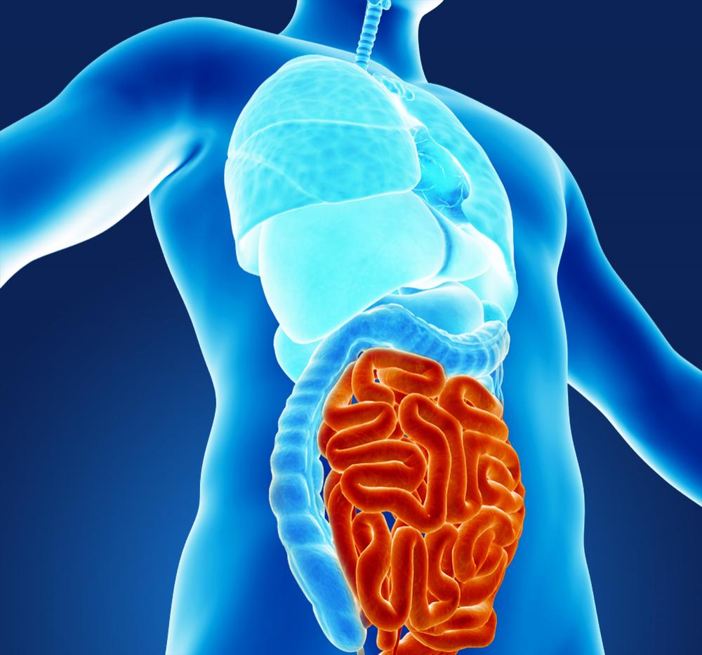 Posizione intestino tenue