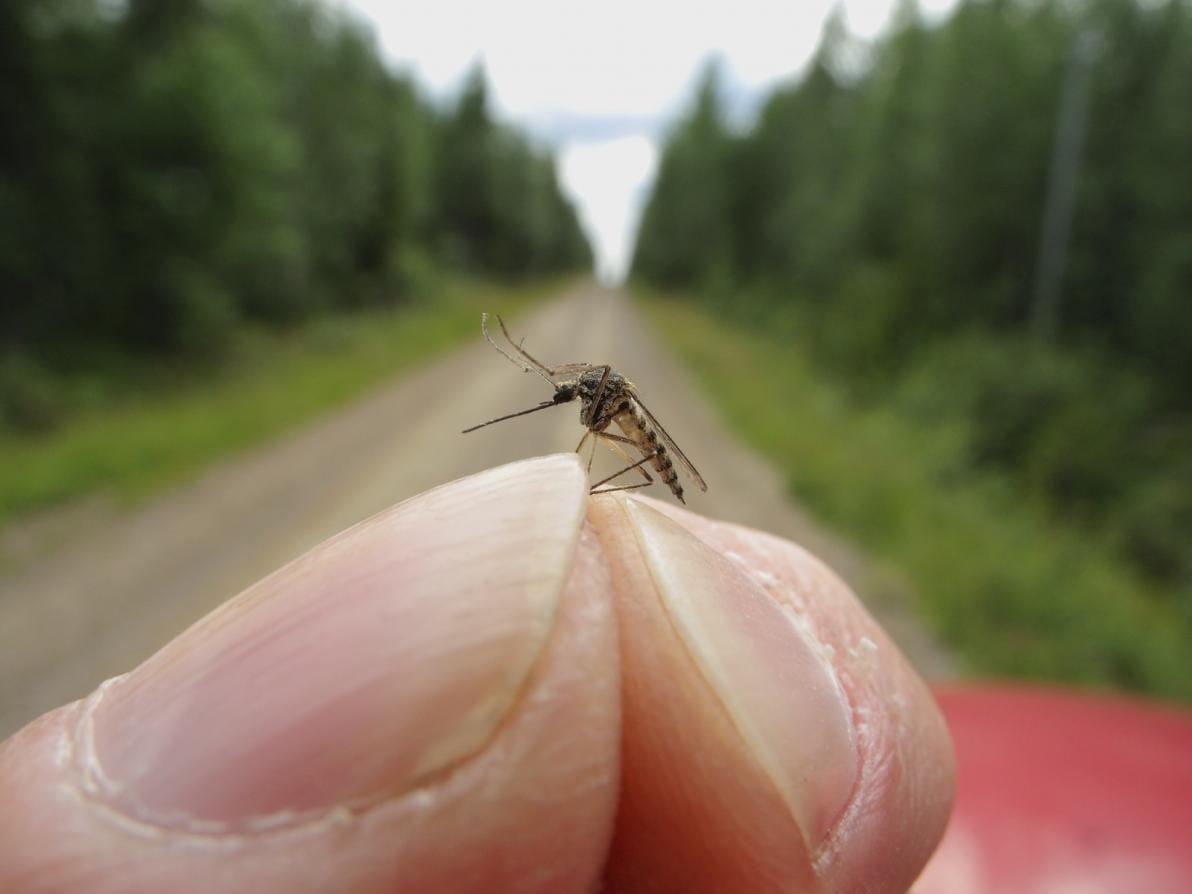 Alimenti che allontanano e attraggono le zanzare