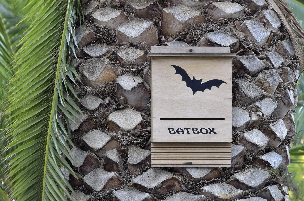 Bat box per ospitare i pipistrelli