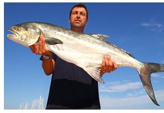 Leccia pesca
