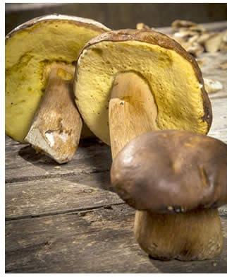 Porcini Funghi