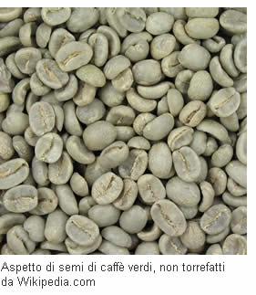 Coltura del caffè verde crudo