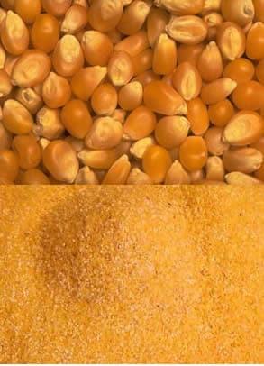 Farina di Mais
