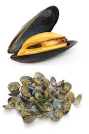 Vongole - Cozze - Molluschi