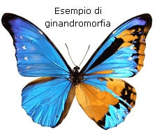 Coefficiente G e Ginandromorfia