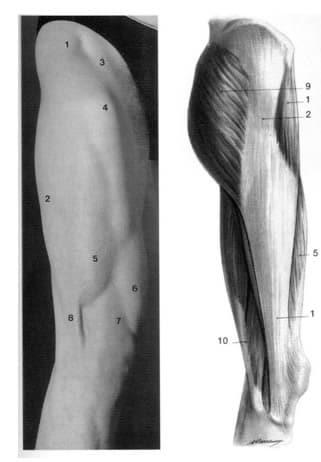 alleniamo i muscoli dell 39 esterno coscia