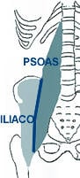 anatomia ileopsoas