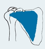 anatomia sottoscapolare