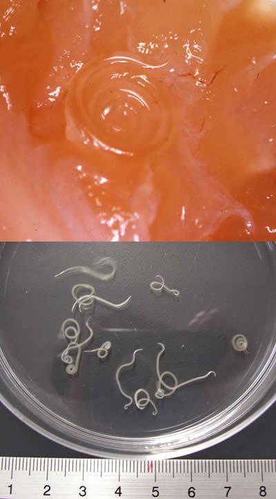Baktefort da parassiti in Vitebsk - Parassiti in un gabinetto di fotografia