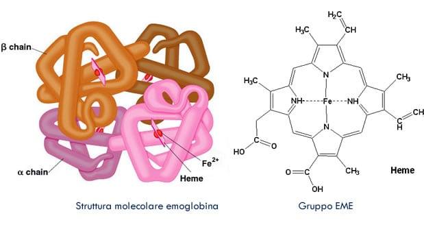 Estructura de la hemoglobina