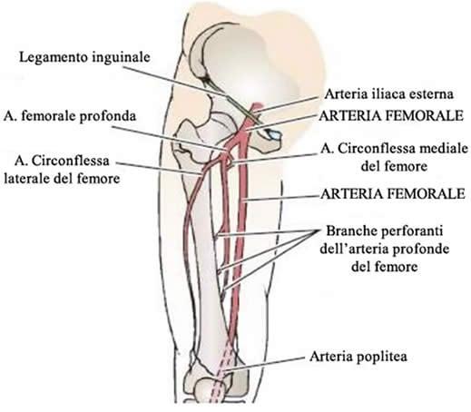 Clinica di trombosi di vene profonde di uno stinco