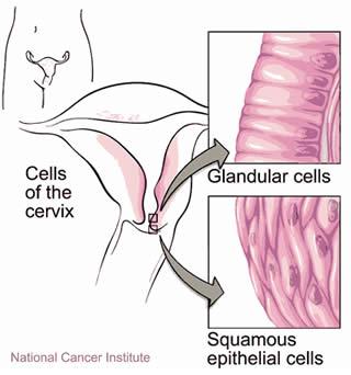 Cellule Cervice