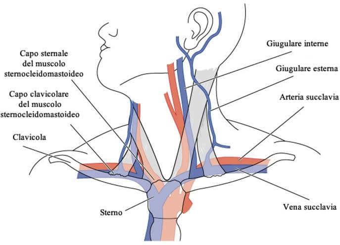 Prevenzione di varicosity di posizione di vene