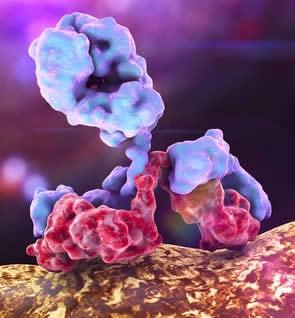 immunoglobuline anticorpi