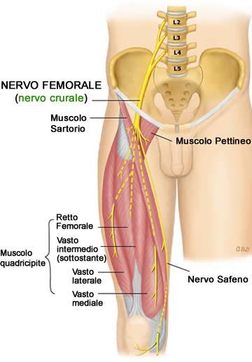Nervo Crurale