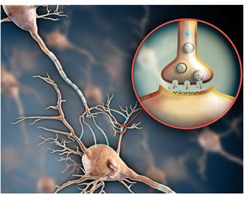 Neurotrasmettitori sinapsi chimica