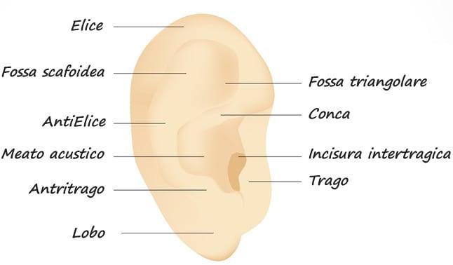 orecchio-esterno