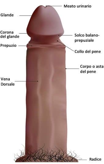 La metodología del masaje del pene para su aumento