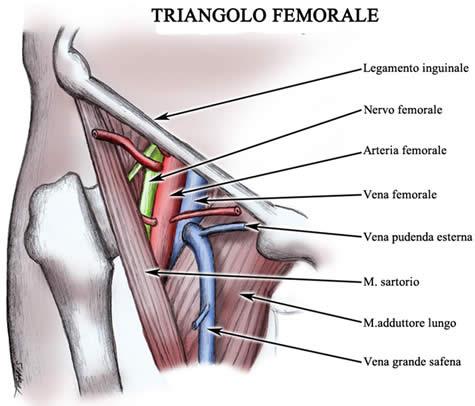 Triangolo femorale