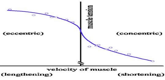 meccanica muscolare