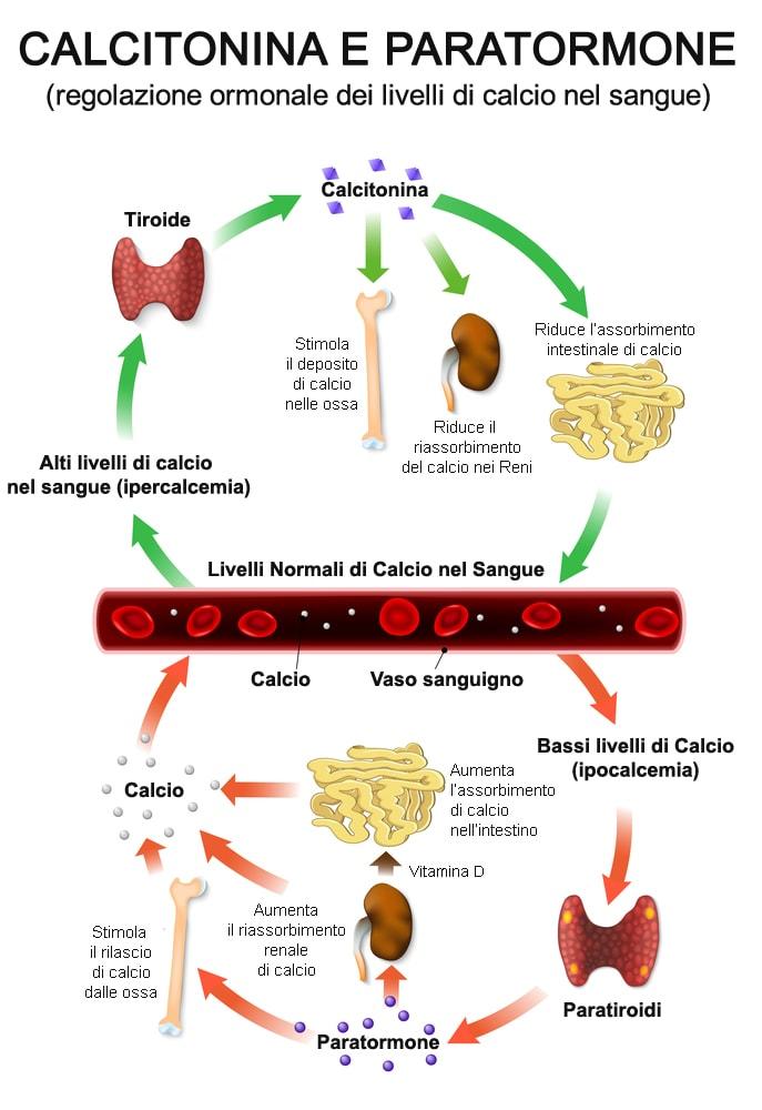 calcitonina-paratormone