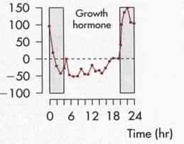 gh circadiano secrezione