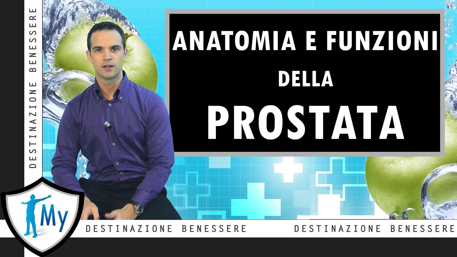 anatomia topografica prostata