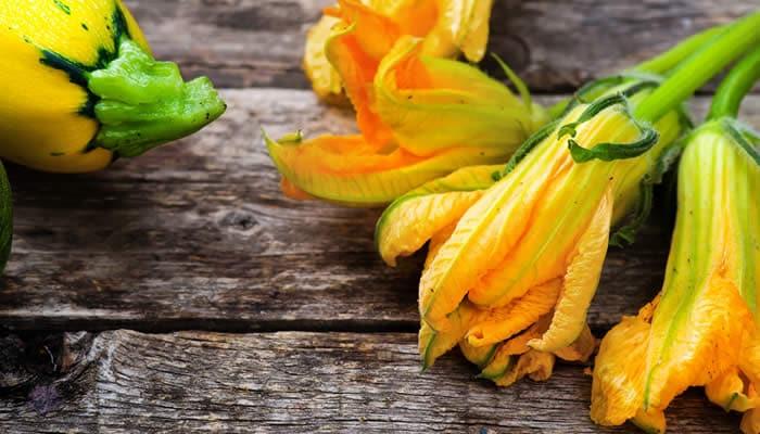 Piante Di Zucca : Ricette con fiori di zucca video alice
