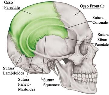 https://www.my-personaltrainer.it/imgs/2018/02/09/sindrome-di-apert-e-sutura-coronale-orig.jpeg