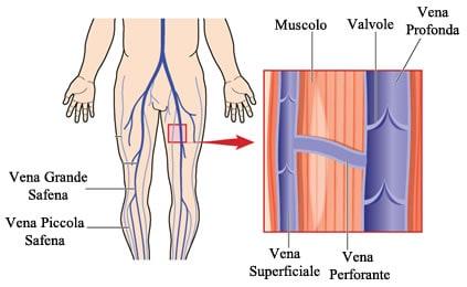 http://www.my-personaltrainer.it/imgs/2018/02/26/vena-safena-valvole-orig.jpeg