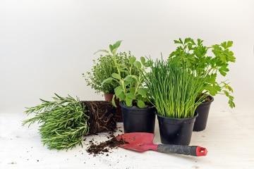 http://www.my-personaltrainer.it/imgs/2018/03/01/piante-aromatiche-orig.jpeg
