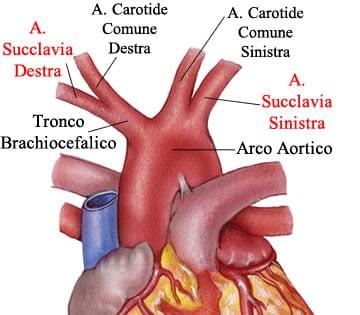 http://www.my-personaltrainer.it/imgs/2018/03/05/arteria-succlavia-asimmetria-orig.jpeg