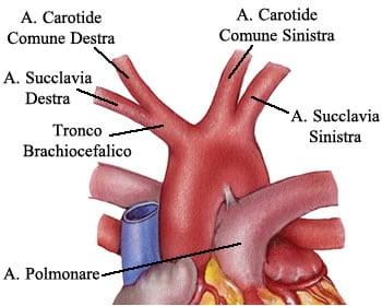 http://www.my-personaltrainer.it/imgs/2018/03/08/arco-aortico-e-branche-orig.jpeg