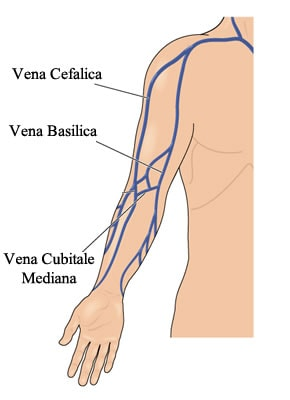 http://www.my-personaltrainer.it/imgs/2018/03/08/vene-del-braccio-basilica-cefalica-e-cubitale-mediana-orig.jpeg