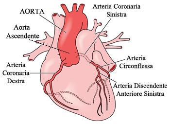 https://www.my-personaltrainer.it/imgs/2018/03/16/aorta-ascendente-coronarie-orig.jpeg
