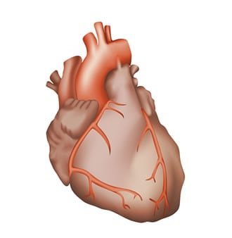 https://www.my-personaltrainer.it/imgs/2018/03/16/aorta-ascendente-orig.jpeg