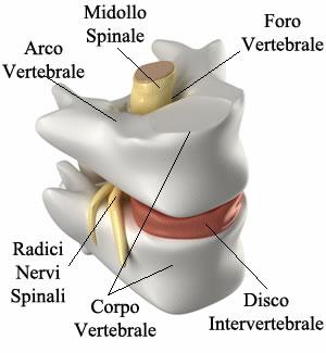 http://www.my-personaltrainer.it/imgs/2018/03/20/bulging-discale-le-vertebre-e-i-dischi-intervertebrali-orig.jpeg