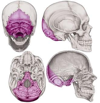 https://www.my-personaltrainer.it/imgs/2018/03/24/osso-occipitale-orig.jpeg