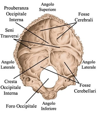 http://www.my-personaltrainer.it/imgs/2018/03/24/osso-occipitale-superficie-interna-orig.jpeg