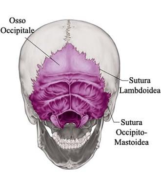 https://www.my-personaltrainer.it/imgs/2018/03/24/osso-occipitale-suture-craniche-orig.jpeg