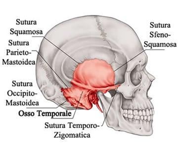http://www.my-personaltrainer.it/imgs/2018/03/26/osso-temporale-suture-craniche-orig.jpeg