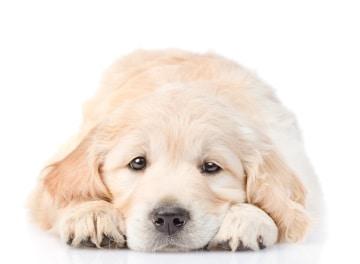 https://www.my-personaltrainer.it/imgs/2018/03/29/vermi-intestinali-dei-cani-orig.jpeg