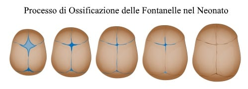 http://www.my-personaltrainer.it/imgs/2018/05/07/fontanelle-ossificazione-orig.jpeg