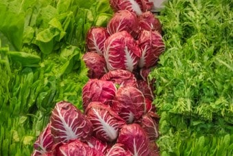https://www.my-personaltrainer.it/imgs/2018/05/18/radicchio-orig.jpeg