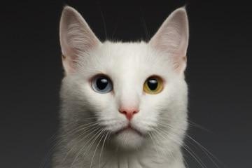 https://www.my-personaltrainer.it/imgs/2018/06/01/eterocromia-occhi-di-colore-diverso-2-orig.jpeg