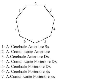 https://www.my-personaltrainer.it/imgs/2018/06/05/poligono-di-willis-eptagono-orig.jpeg